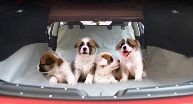 Protectores de asientos para mascotas para el Tesla Model Y